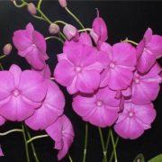 Dendrobium Classic Gem